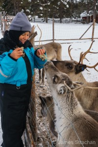 A traveling Vegan Feed reindeer